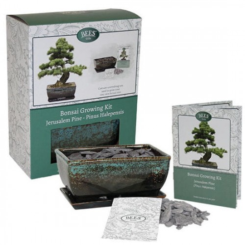 bonsai growing kit zestaw uprawowy do bonzai.jpg